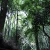 [旅行] 京都嵐山 行ってきた その1 さすが京都 どこ見てもキレイ